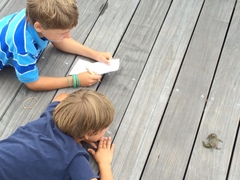 The boys watching a crab they've caught.
