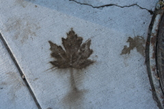 A leaf print on the sidewalk