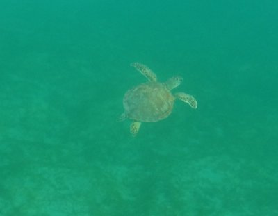 And we will remember the day Joshua swam near his first sea turtle