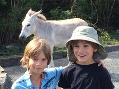 The parking lot has 3 wild donkeys standing there – the boys are fascinated.