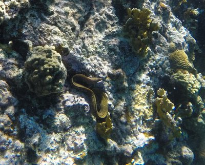The 3-foot moray eel (kind of looks like a large rubber band)