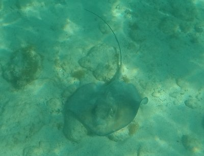 Sting ray 6 feet below me