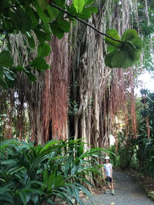 Joshua near a banyan tree