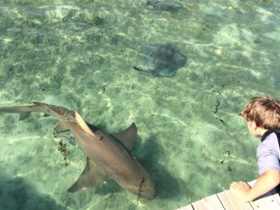 Sharks in the marina