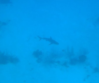 Shark #1 at Jeep Reef