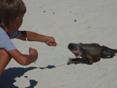 Joshua feeding an iguana