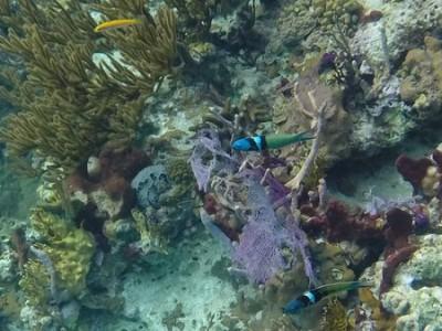 Coral Garden Reef, O'Brien's Cay, Exumas